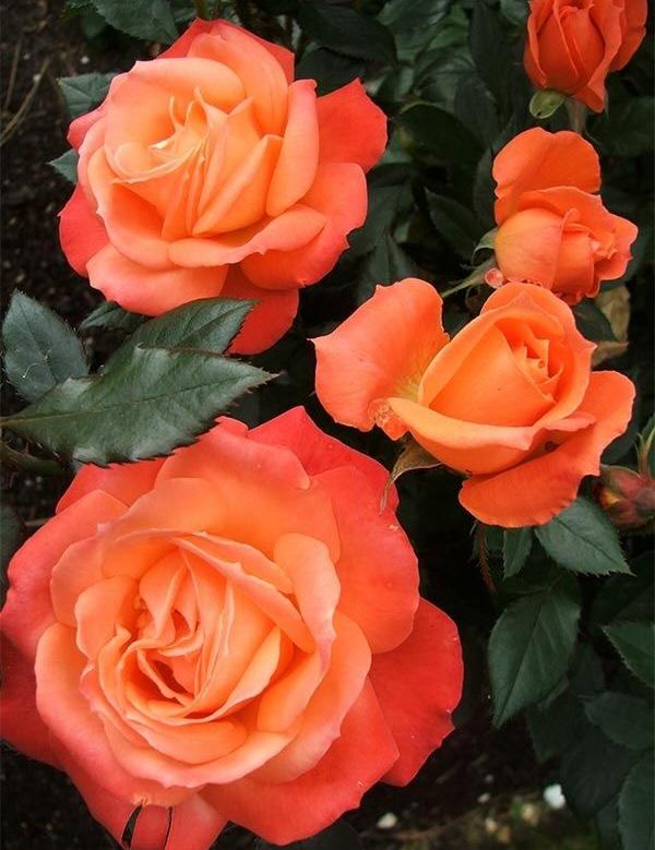 Muriel Mahn Obituary - Visitation & Funeral Information