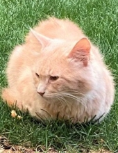 Photo of Rascal Cat Aleo