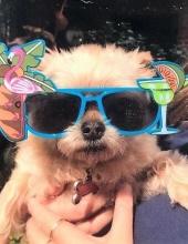 Photo of Coco Pepper