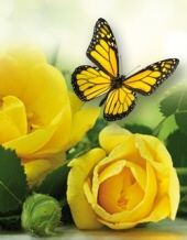 Evelyn Herman