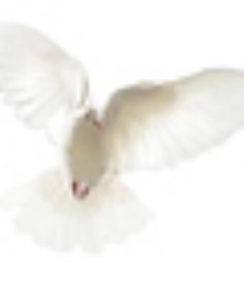 Ms. Girlinda Wilson-Syed Obituary